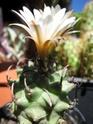 un kipik en fleurs Juin_220