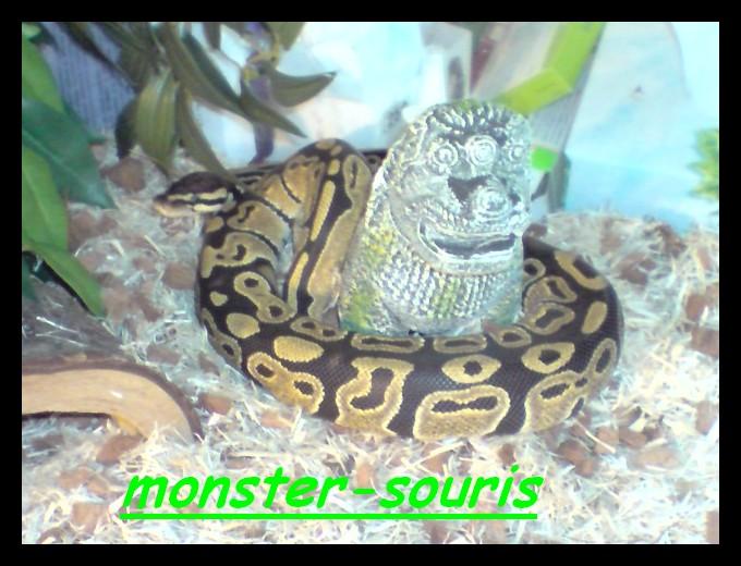 mes serpents P0803010