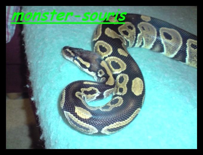 mes serpents P1109010