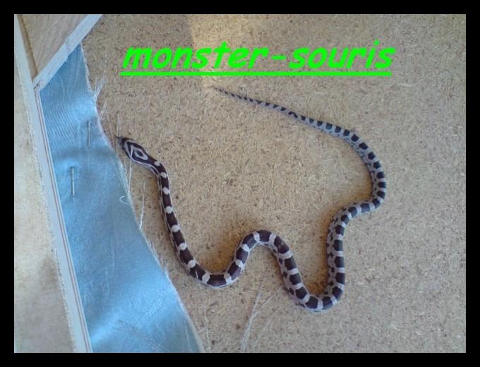 mes serpents P1409011