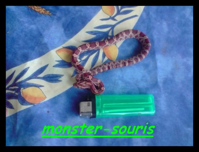 mes serpents P2010010