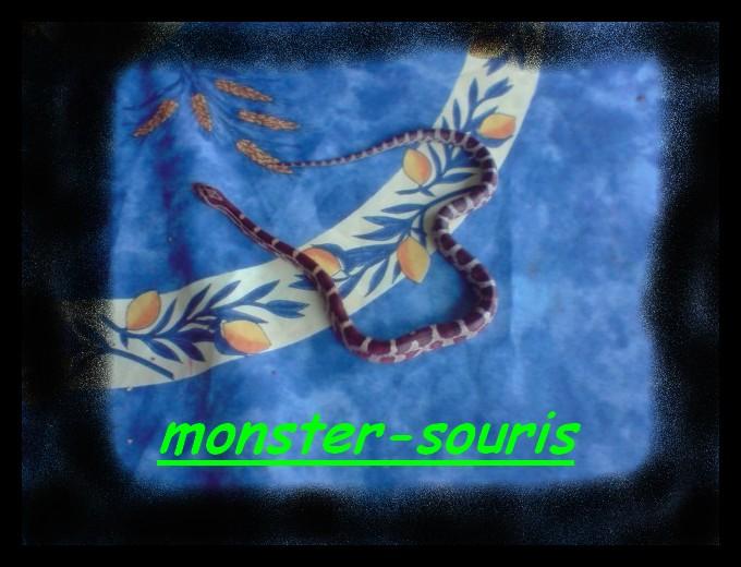 mes serpents P2010011