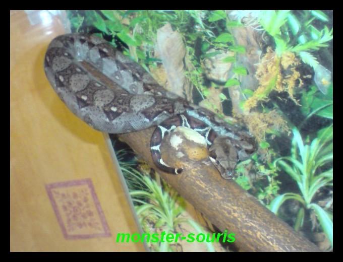 mes serpents P2908010