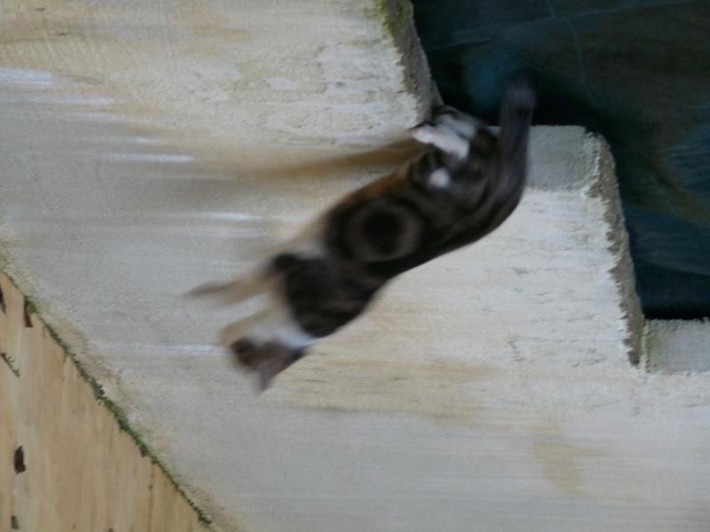 Savez-vous comment repousser les chats ? P1010310