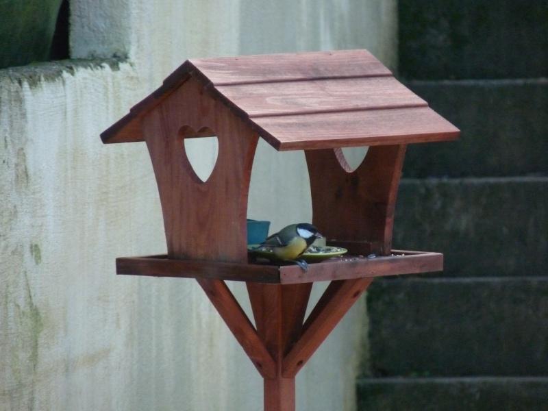 Avez-vous pensé aux oiseaux cet hiver ? P1010611