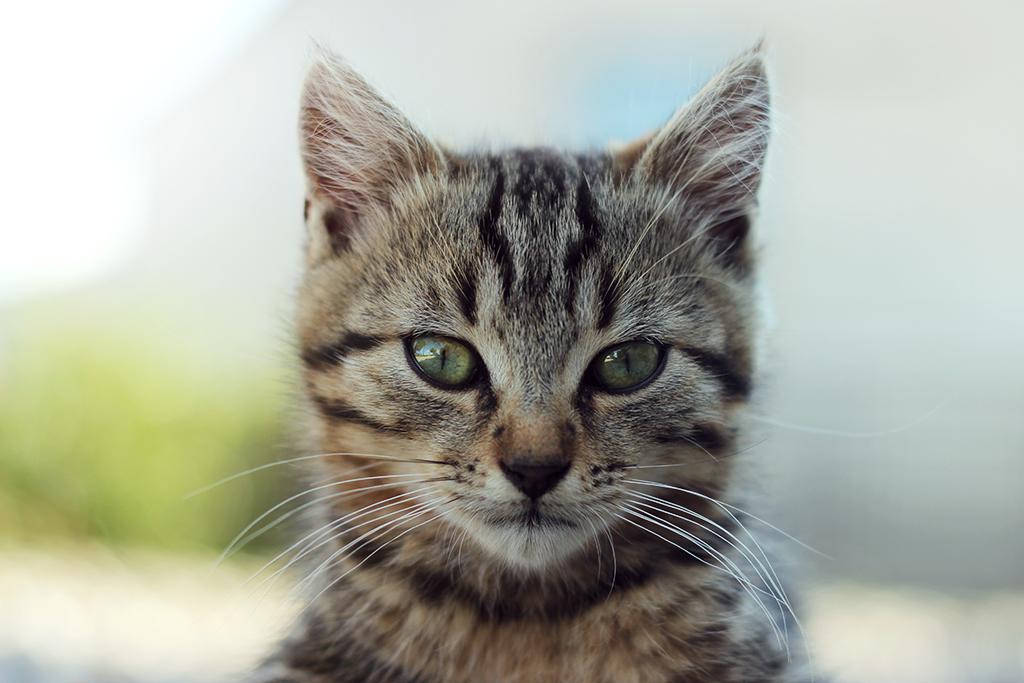 [Animaux] Photo d'identité Cat_id10