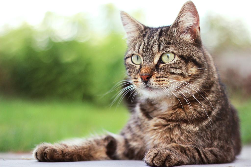 nouveau chat Nouvea11