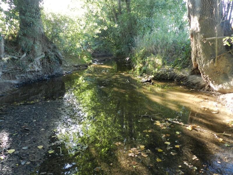 Promenade dans la rivière en juillet 2015 Vauvyr70