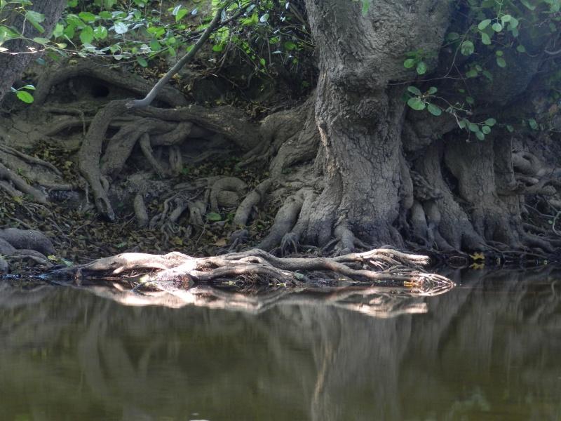 Promenade dans la rivière en juillet 2015 Vauvyr74