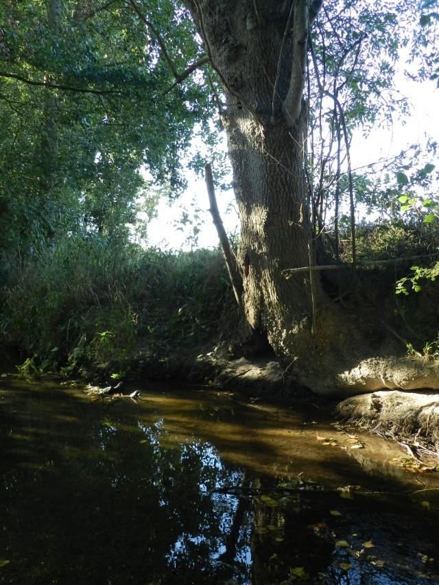 Promenade dans la rivière en juillet 2015 Vauvyr76