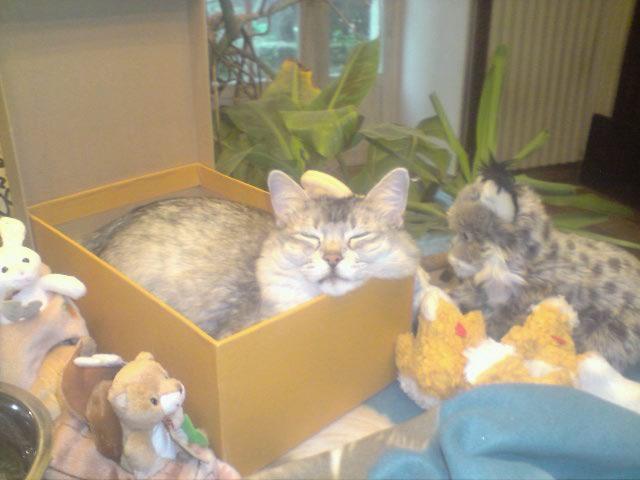 A mon loulou d'amour, toi petit chat ki m'a donné 10 ans de bonheur..... Resize10