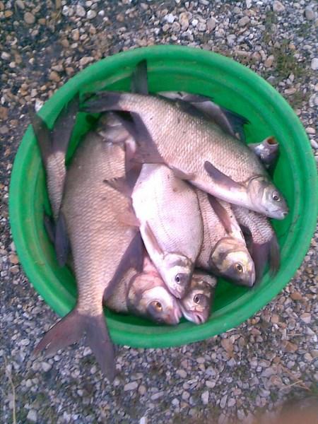 Pêche au feeder 27_07_13