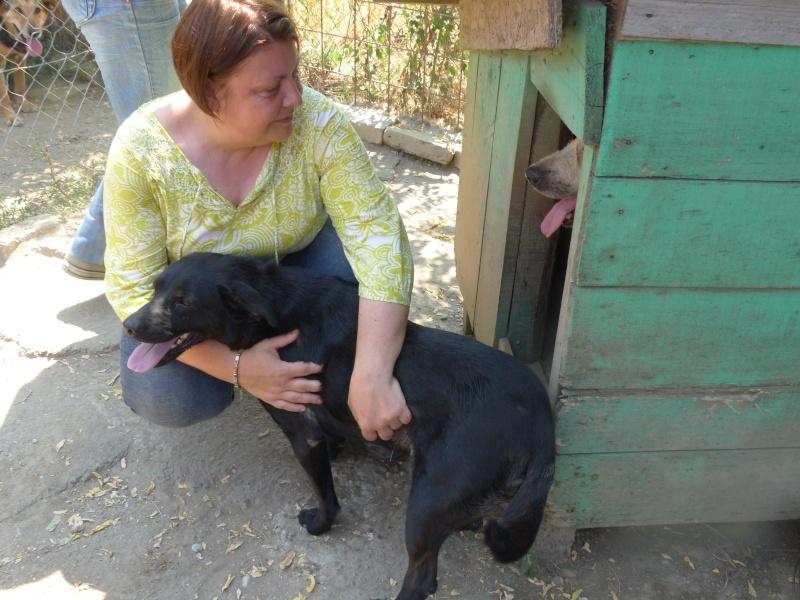 DARIA - Née 2011 - 17 kg - Un amour de louloute - (pension Belgrade )/ PEUT ARRIVER DES MI 09/2018 Daria10