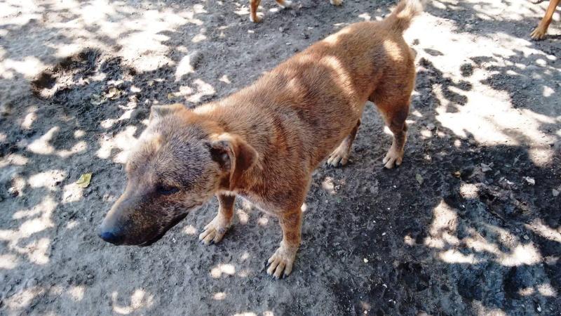 KYLE, M-X, né 2014, 15 kg (BELLA) - Pris en charge Les Amis des Bêtes du Soissonnais Kyle10