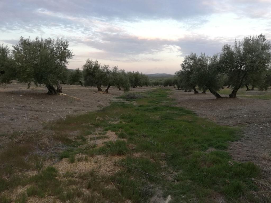 Manejo de suelos y uso de herbicidas - Página 4 Img_2012
