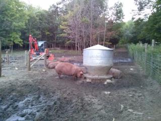 Le Pied de Cochon tombe dans les pommes! Cam04110