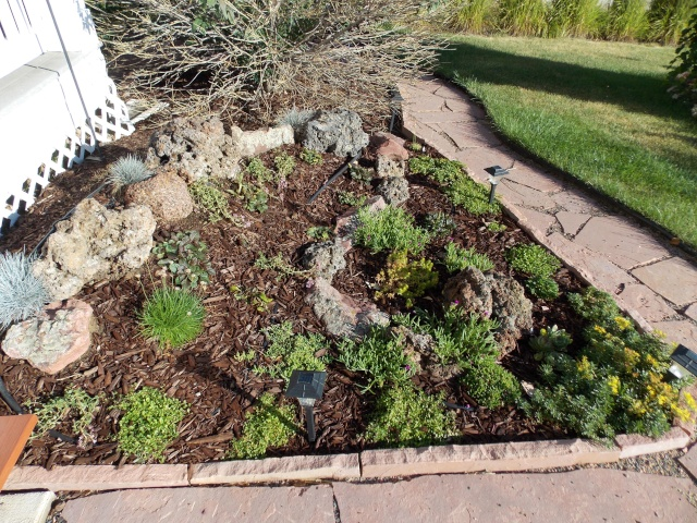 Jenn's 2015 Gardening thread - Page 2 Dscn2417