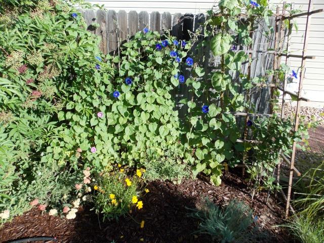 Jenn's 2015 Gardening thread - Page 2 Dscn2418