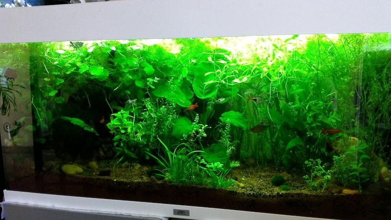 Planté son premier aquarium. Win_2010
