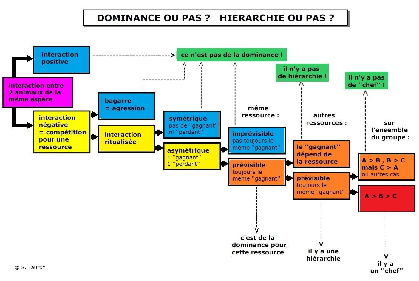 Dominance, hiérarchie: mythe ou réalité - les sources - Page 9 Flowch10