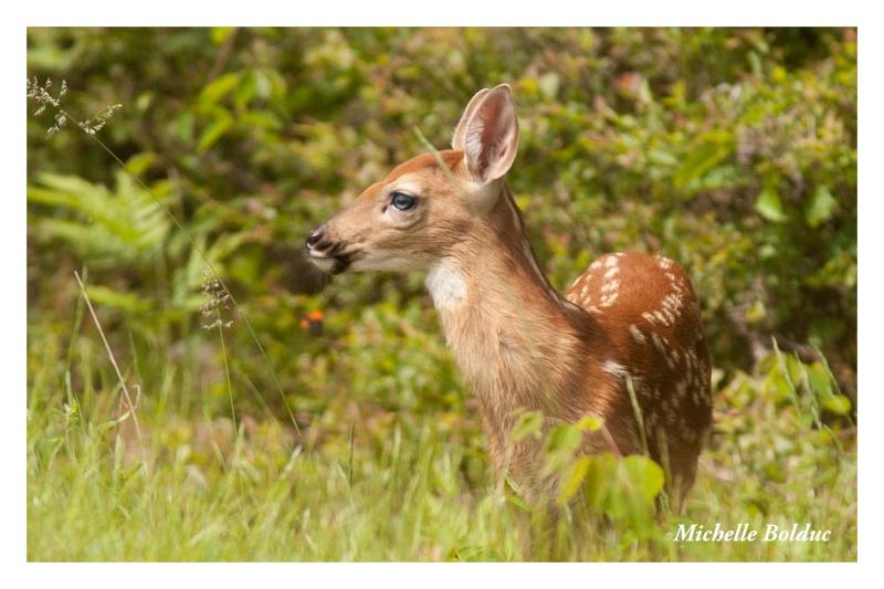 Nouveaux bambis... aux magnifiques yeux bleus Img_4011