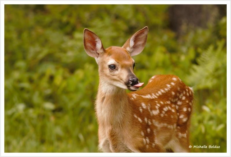 Nouveaux bambis... aux magnifiques yeux bleus Img_4012