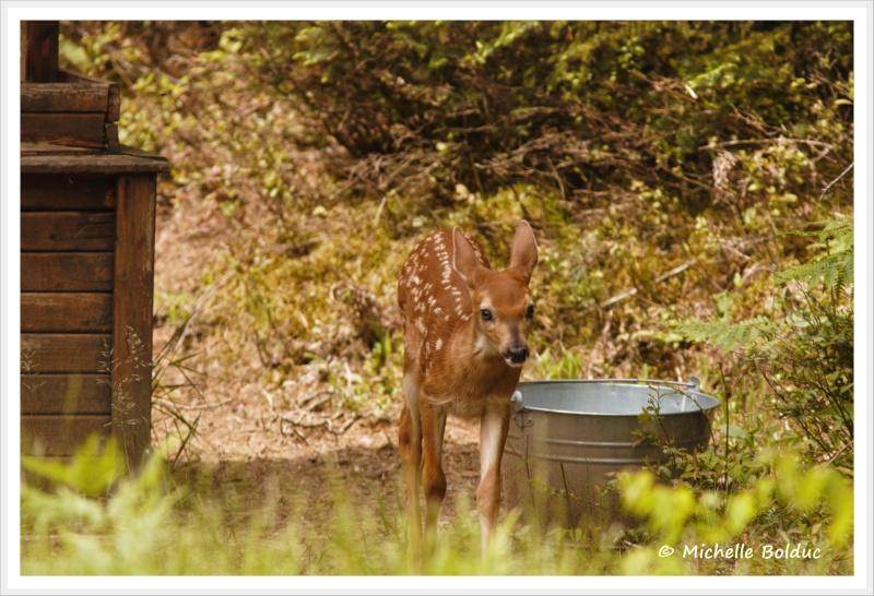 Nouveaux bambis... aux magnifiques yeux bleus Img_4013