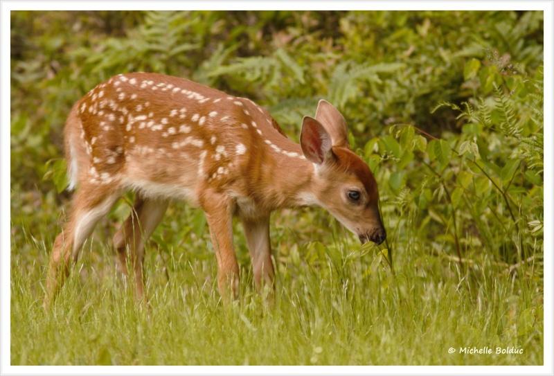 Nouveaux bambis... aux magnifiques yeux bleus Img_4014