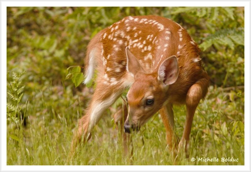 Nouveaux bambis... aux magnifiques yeux bleus Img_4015