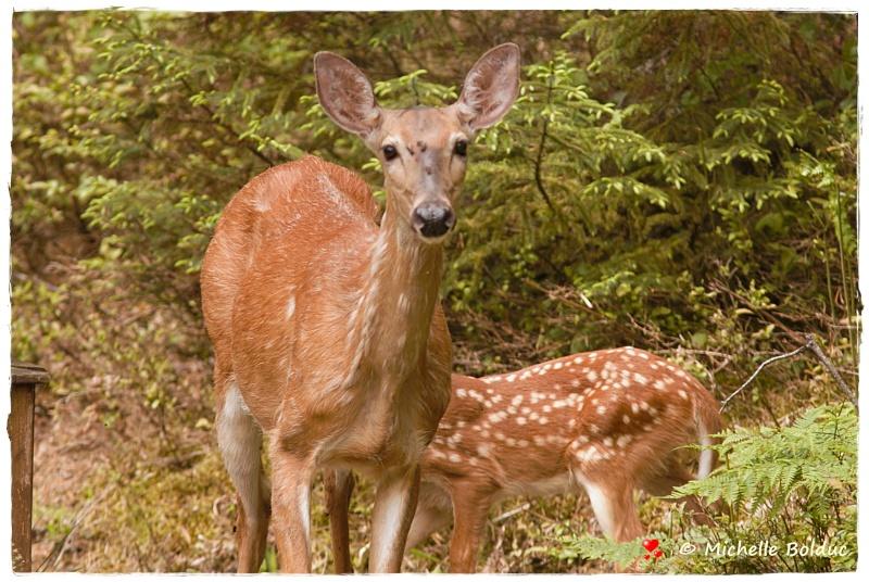 Nouveaux bambis... aux magnifiques yeux bleus Img_4016
