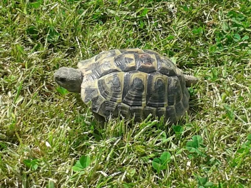Doute sur le sexe de ma tortue Peche_10
