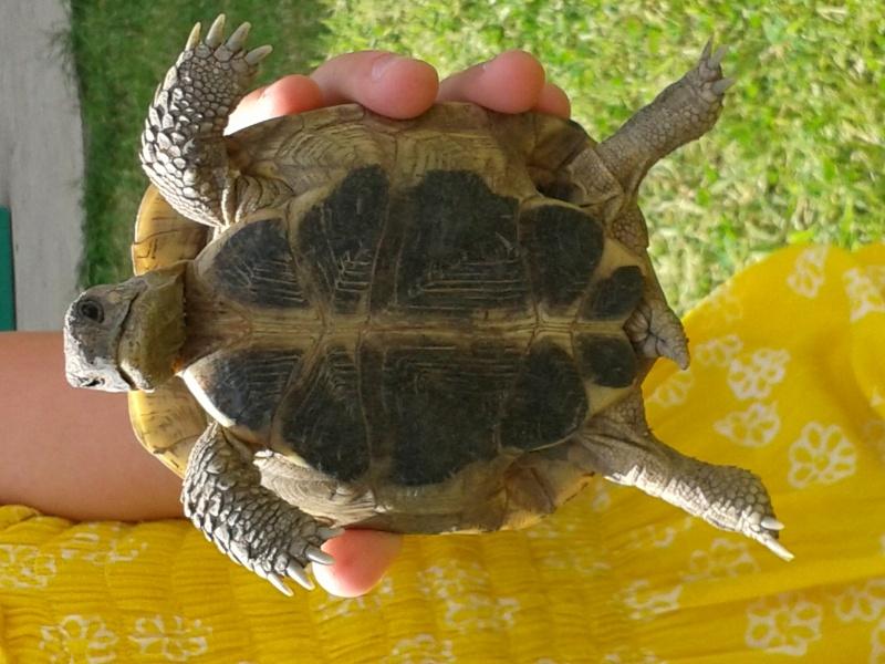 Doute sur le sexe de ma tortue Peche_11