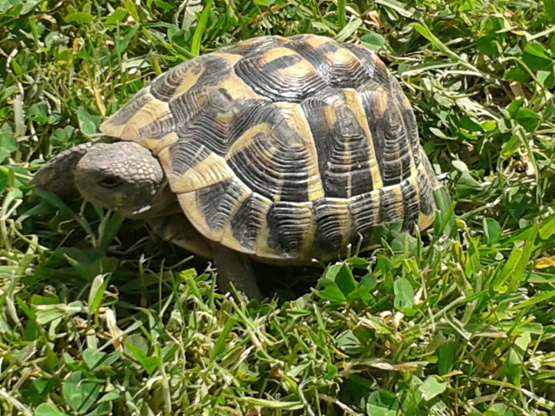 Doute sur le sexe de ma tortue Yoda_c10