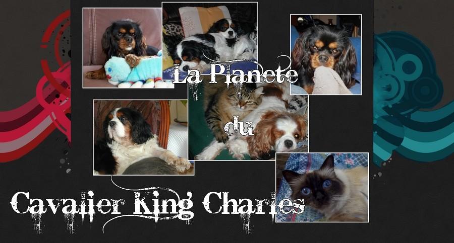 La Planète du Cavalier King Charles