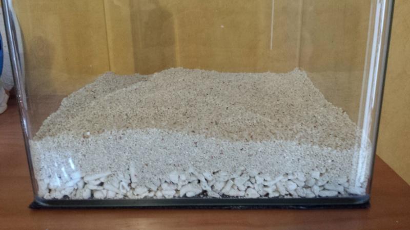 LANCEMENT NANO 30 Litres biotope Sulawesi 20150513