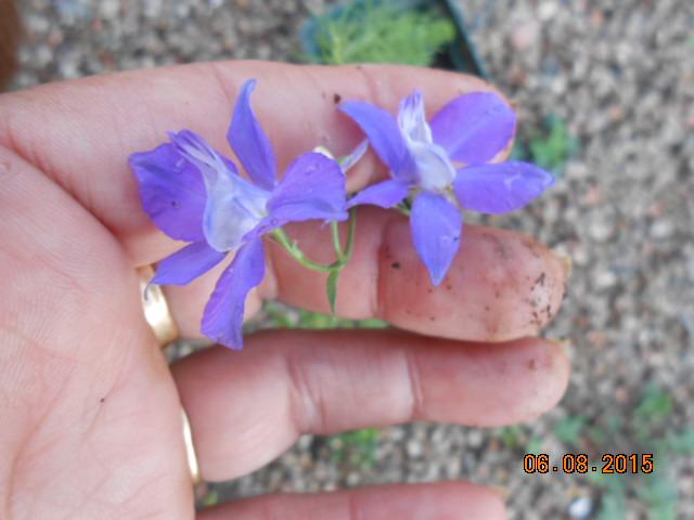Fleur échangé lors d un troc !! Dscn2410