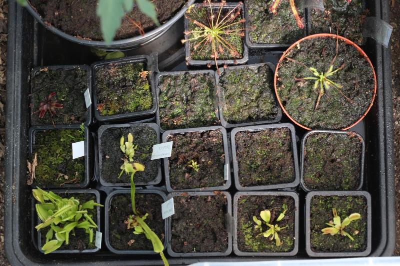 Plantes Phyliok  Img_3711