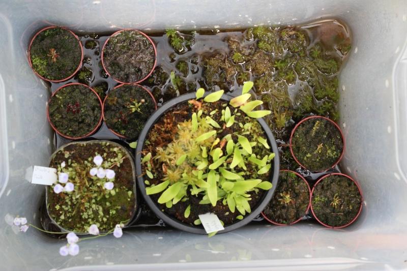 Plantes Phyliok  Img_3712