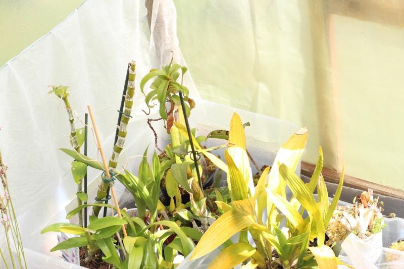 Plantes Phyliok  Img_3714