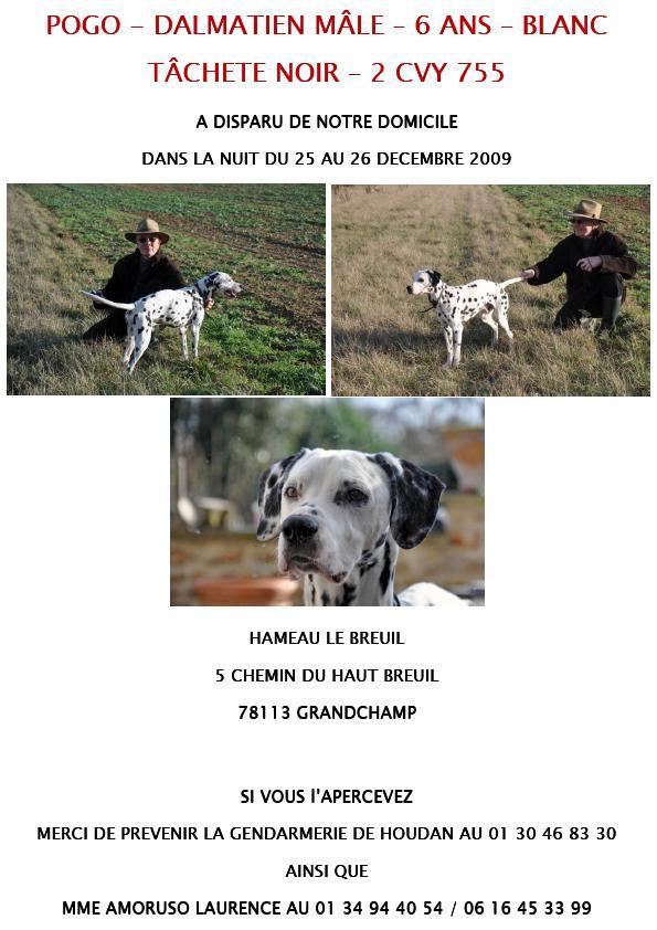 POGO, dalmatien de 6 ans s'est sauvé dans le dept 78 dans la nuit du 25/12/09 Pogo10