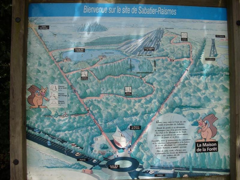 Forêt Domaniale de Raismes-Saint Amand-Wallers Raisme11