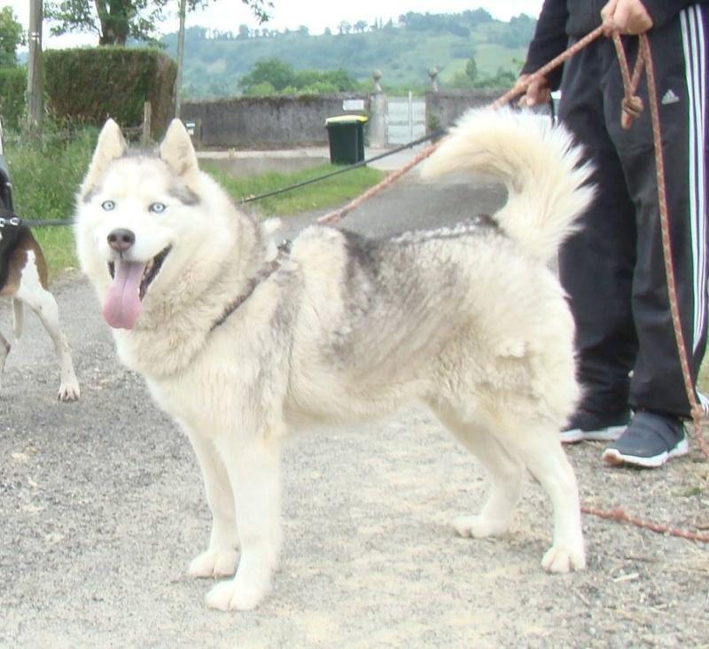 Balika, Husky 9 ans douce ok enfants chiens REFU64 ADOPTEE 10639710
