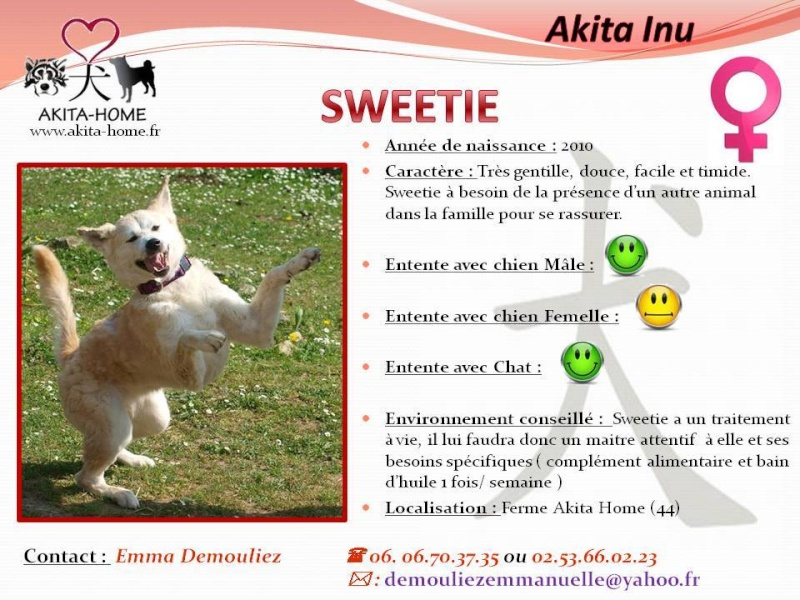 Sweetie Akita Inu rousse 4 ans (f) ASSO44 ADOPTEE 11053310