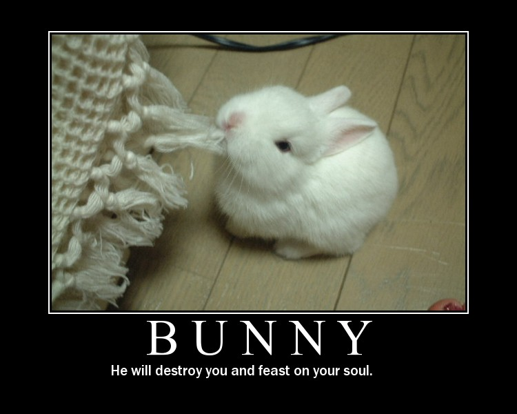 The Funny Pictures Thread! - Page 2 Bunny-10