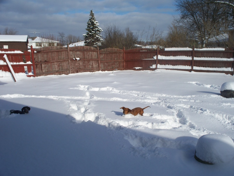 Lovely Winter.....lol 100_5212