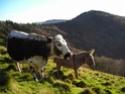 Bienvenue dans les Vosges Thumb_12