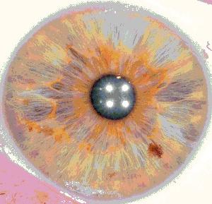 L'IRIDOLOGIE : tout sur le couleur de vos yeux 5a_bmp10