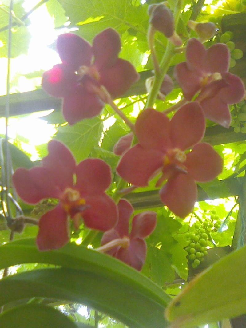 fleurissement du moment  Img04011