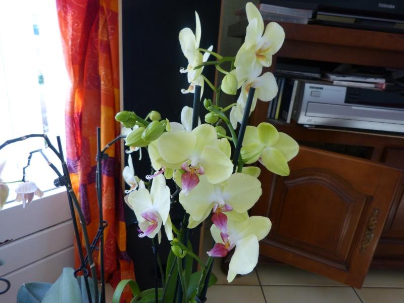 fleurissement du moment  P1050814