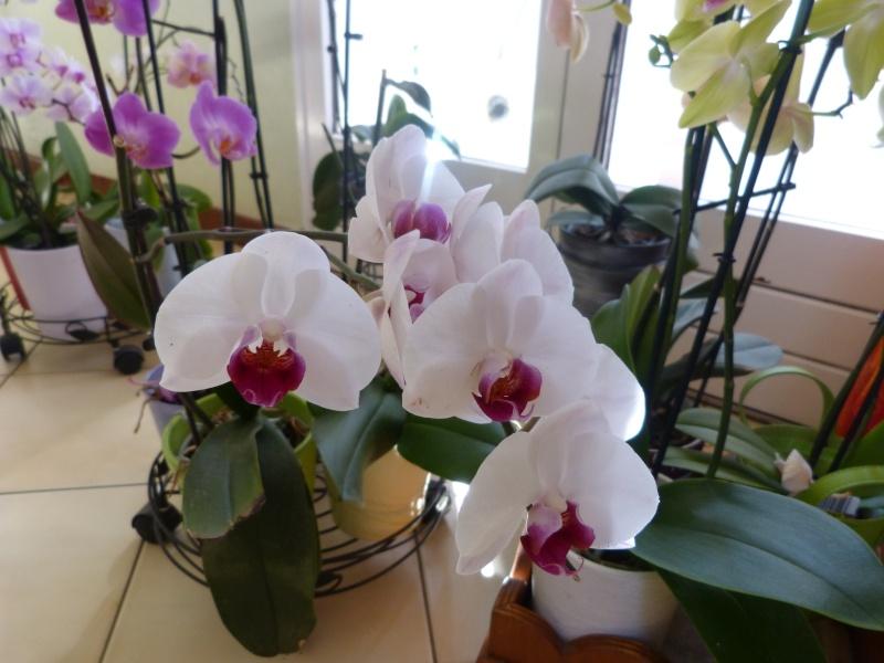 fleurissement du moment  P1050815